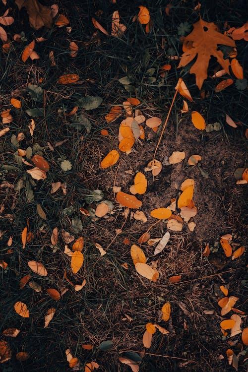 Imagine de stoc gratuită din abstract, arbore, arid