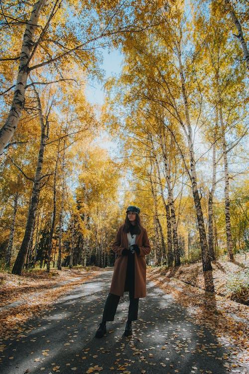 Free stock photo of birch, countryside, daylight
