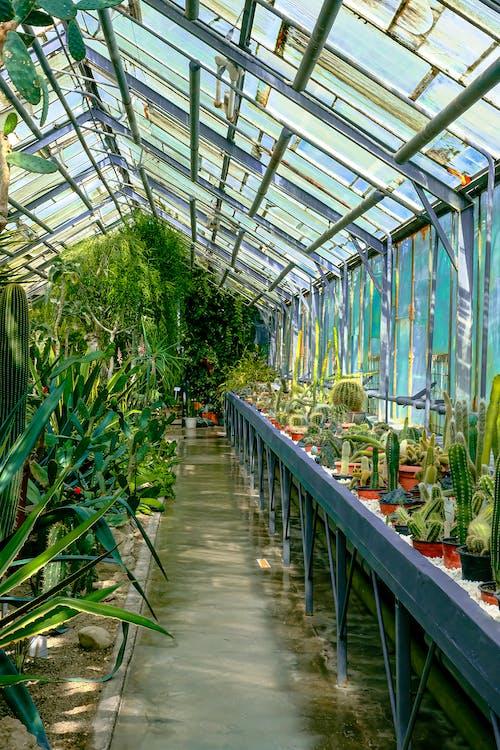 Foto stok gratis botani, dalam ruangan, dedaunan