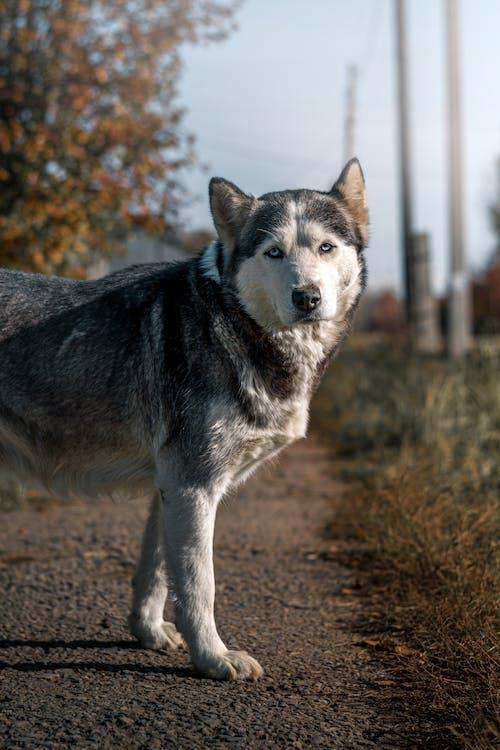 Foto stok gratis anjing, binatang, di luar rumah
