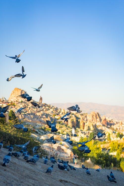 Birds Flying over Rocky Mountain