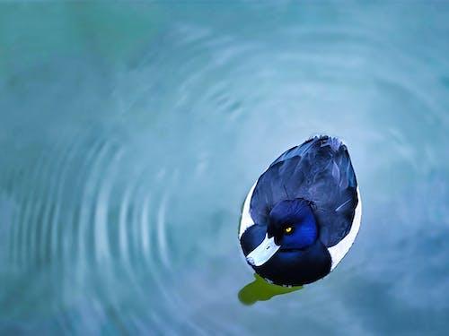 Ảnh lưu trữ miễn phí về bơi lội, chim, chim nước
