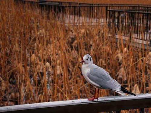 Ảnh lưu trữ miễn phí về cây, chim, công viên ueno