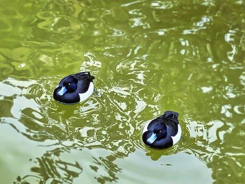 도쿄, 물, 물새의 무료 스톡 사진