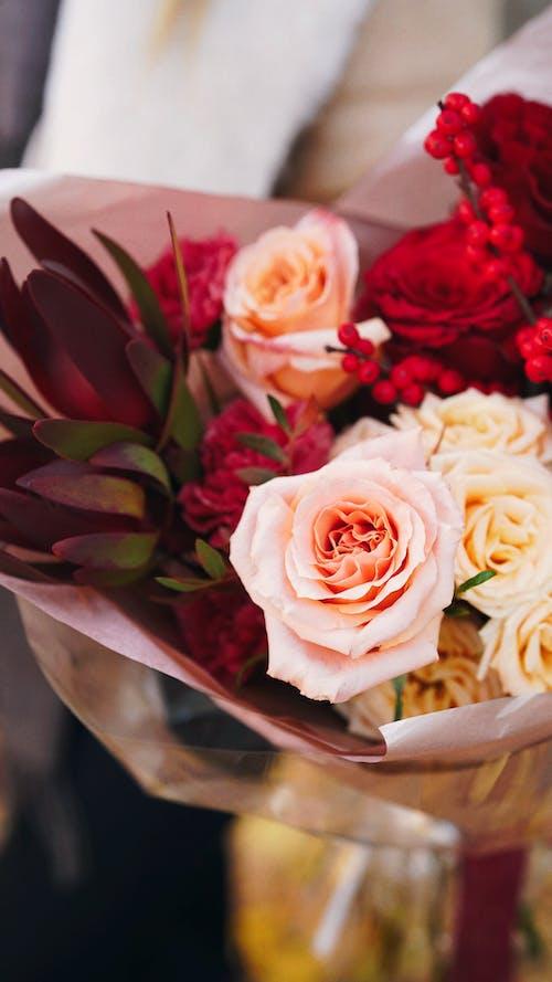 Immagine gratuita di avvicinamento, avvolto, bouquet
