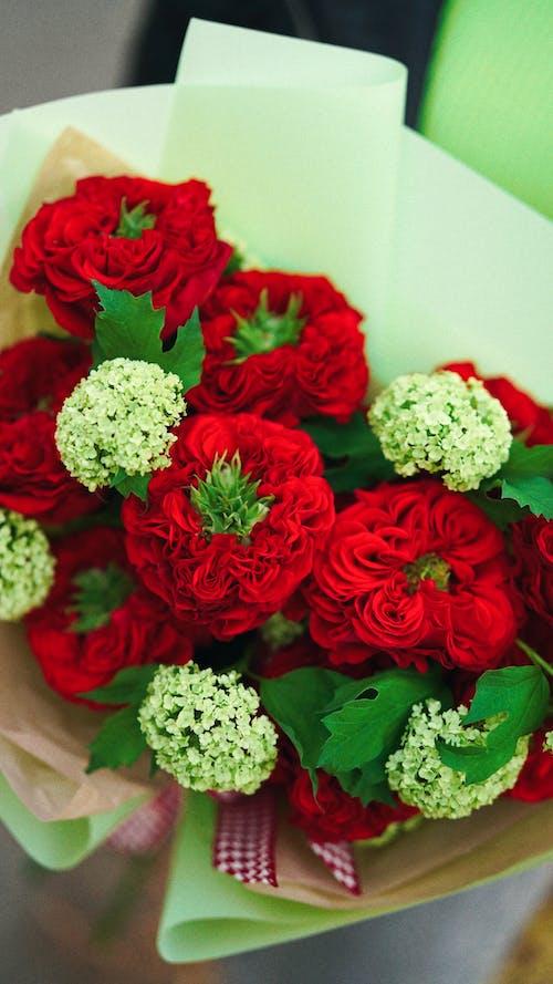 Immagine gratuita di avvicinamento, bianco, bouquet