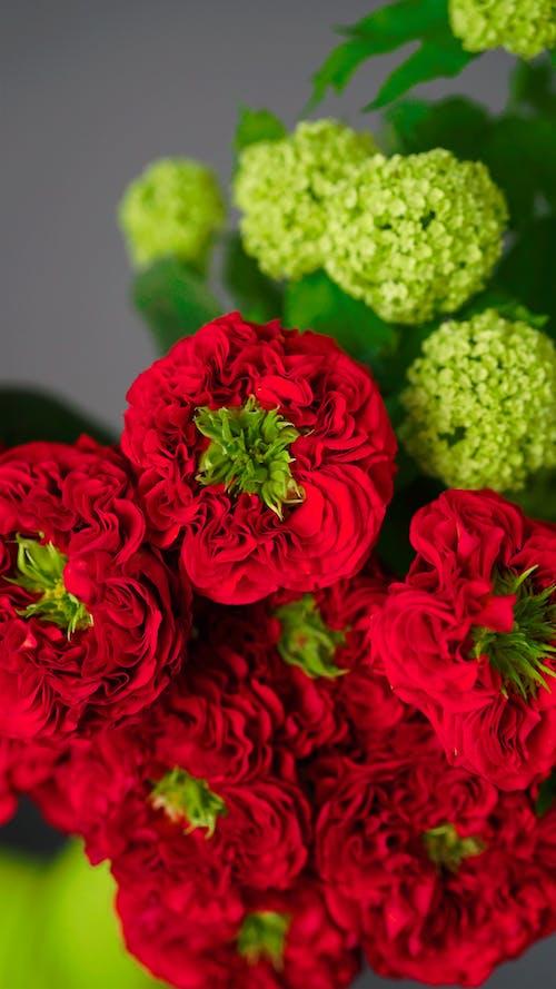 Immagine gratuita di composizione, disposizione, fiori