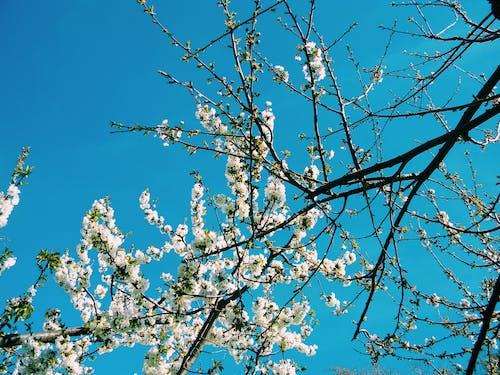 Gratis lagerfoto af blomster, forårsblomst, forårsblomster, Grækenland