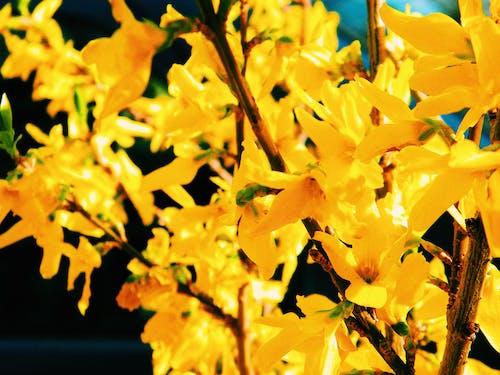 Gratis lagerfoto af blomster, coolpix, forårsblomster, Grækenland