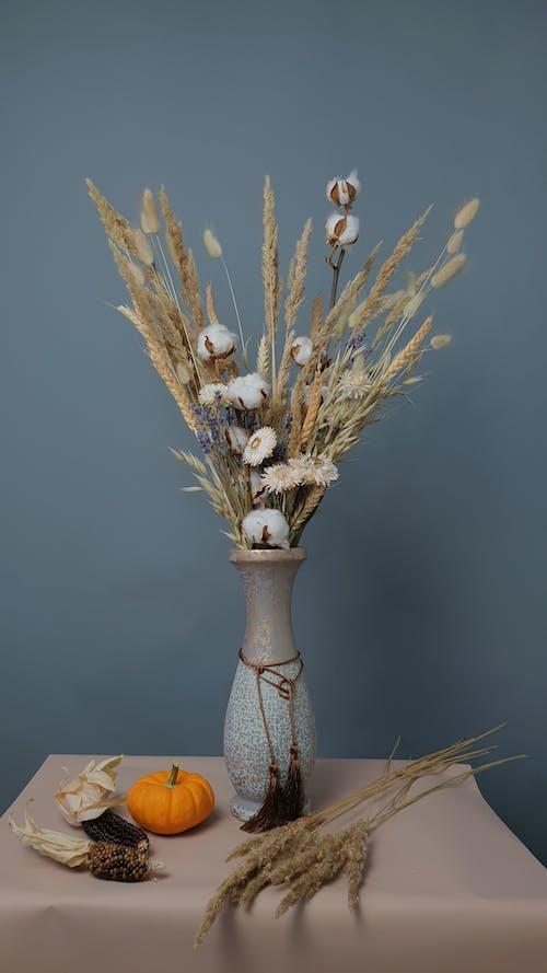 Immagine gratuita di bouquet, cotone, cotone essiccato