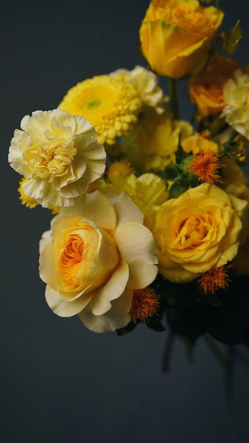 꽃, 꽃잎, 노란 장미의 무료 스톡 사진