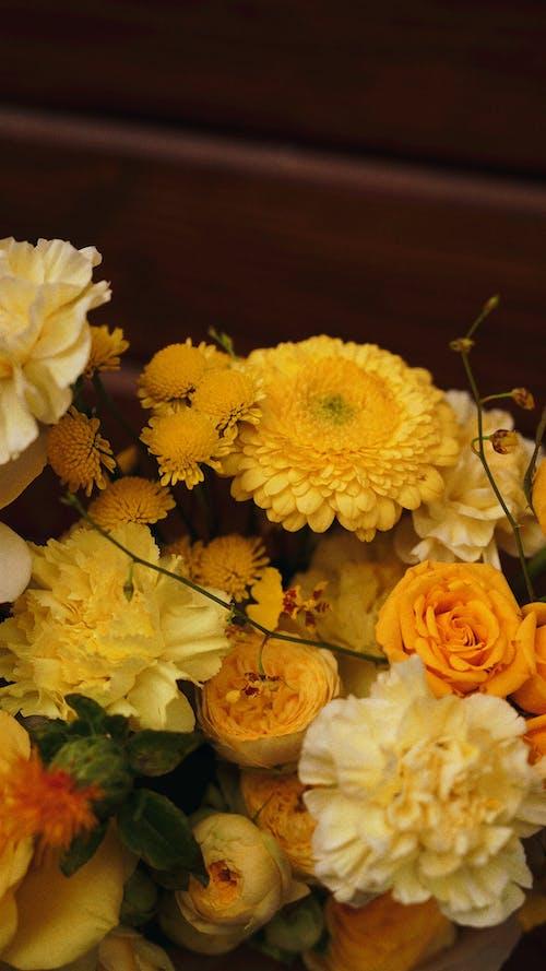 カーネーション, クラボアマレロ, バラの無料の写真素材
