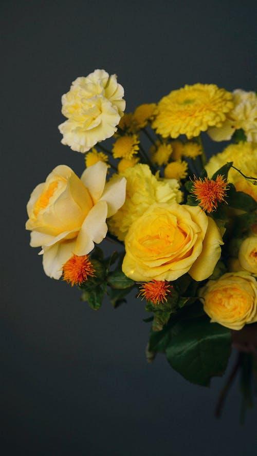 Foto stok gratis anyelir, buket, bunga kuning