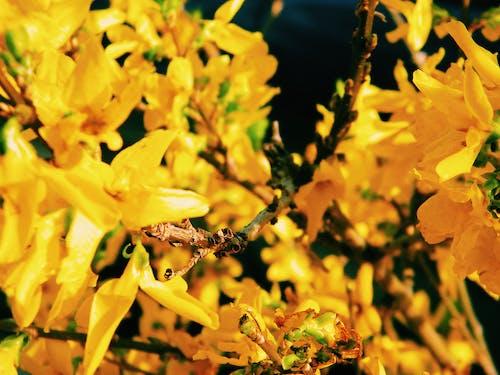 Gratis lagerfoto af blomst, blomster, edessa, forår