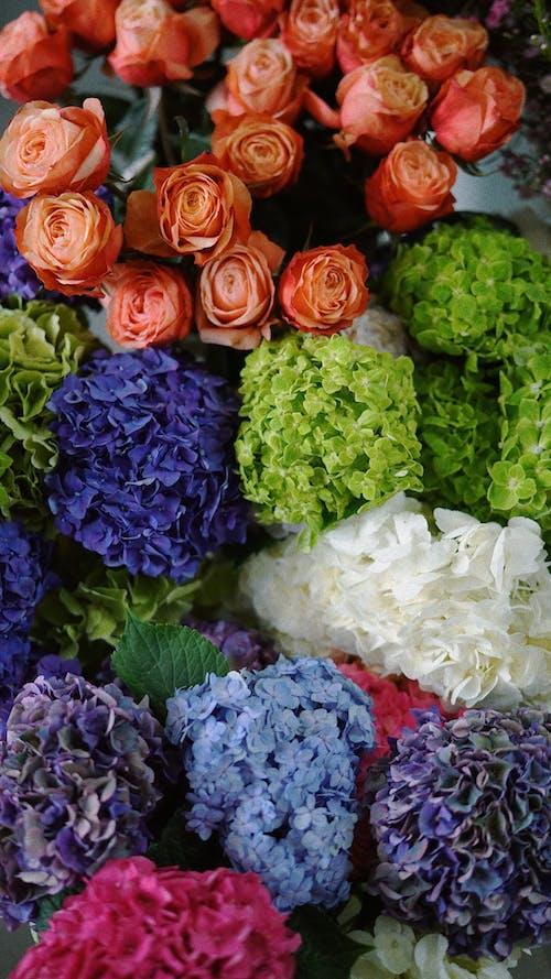 植物學, 玫瑰, 白花 的 免費圖庫相片