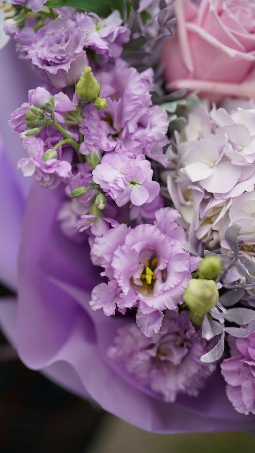 Foto stok gratis bunga, daun, dekorasi