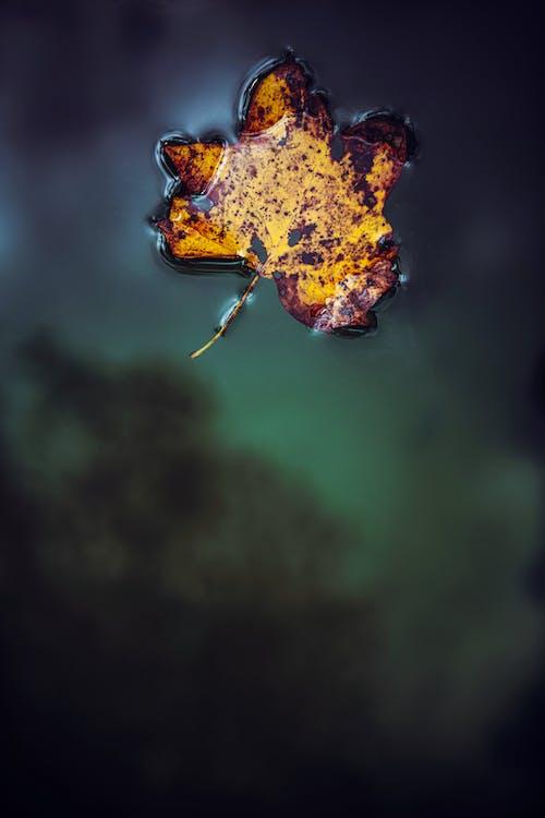 Immagine gratuita di acqua, atmosfera de outono, autunno