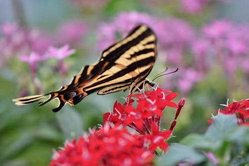 Free stock photo of butterfly, butterfly on a flower, insect