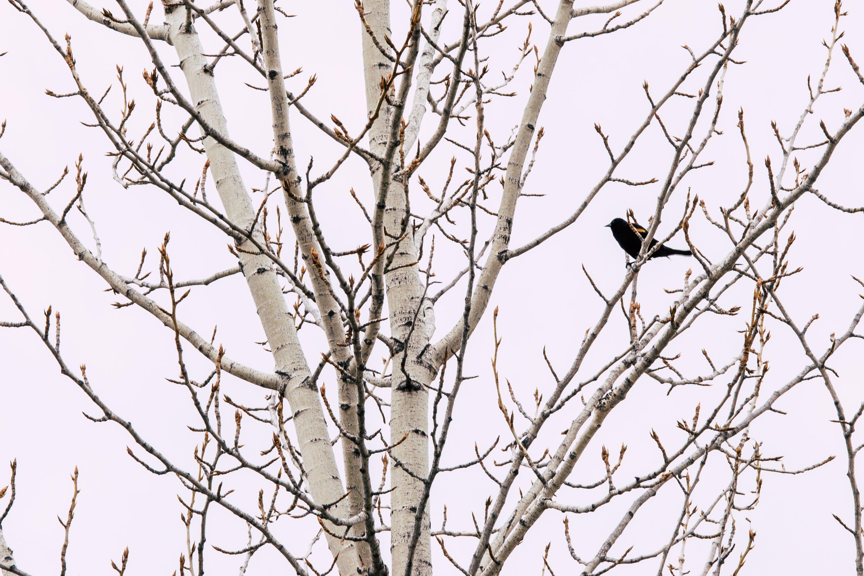 Free stock photo of wood, nature, bird, tree