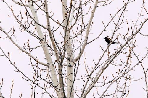 Gratis arkivbilde med årstid, dagslys, fugl, gren