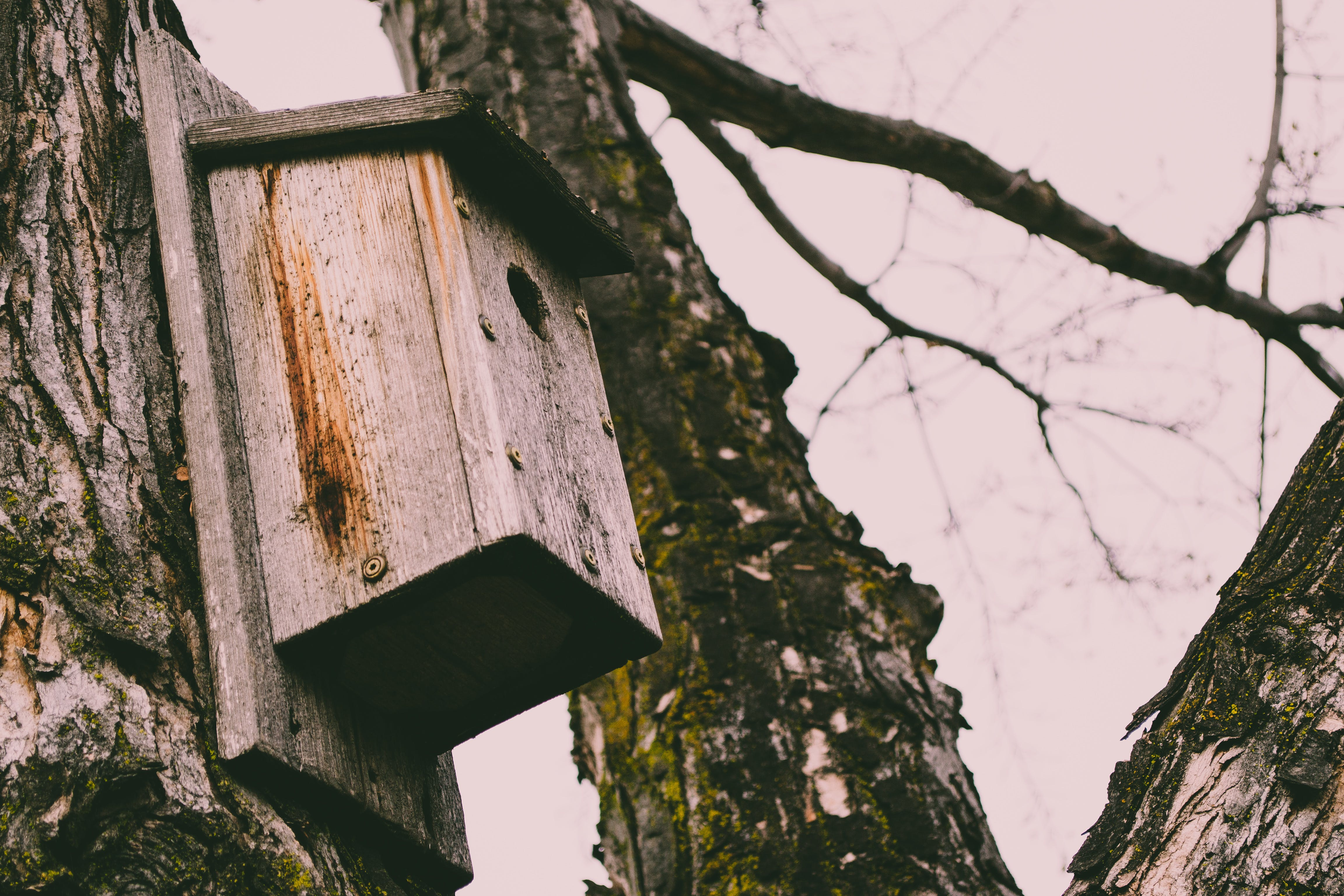 Brown Wooden Bird House on Tree