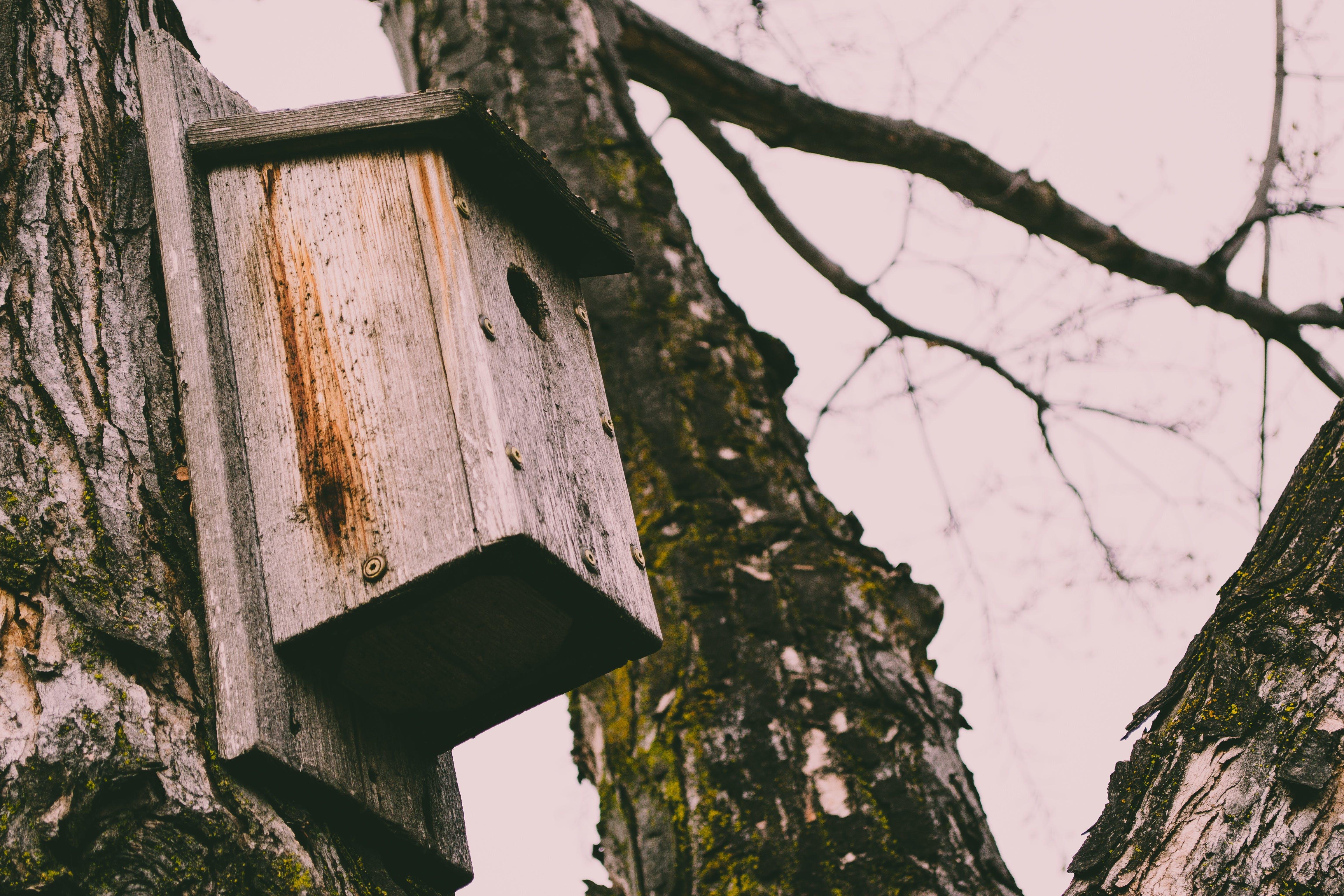 Brown Wooden Bird House on Tree