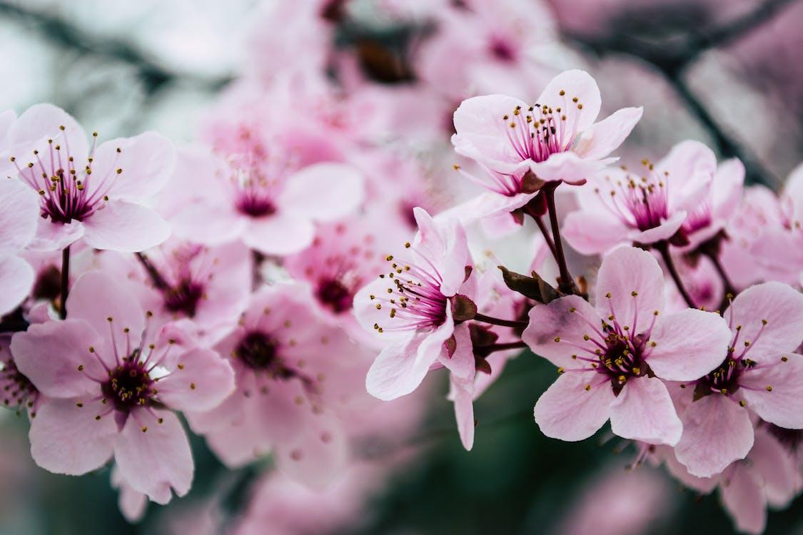 Rosa Blütenblatt Nahaufnahmefoto
