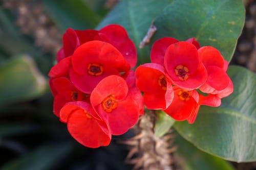 Kostenloses Stock Foto zu blumen, regenwald, rote blüten, tropisch