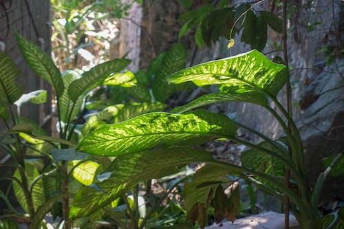 bitkiler, orman, yağmur ormanı, yeşil içeren Ücretsiz stok fotoğraf
