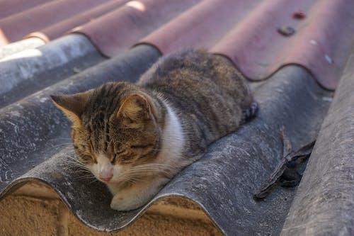 kedi, kök, teneke, teneke çatı içeren Ücretsiz stok fotoğraf