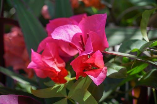 bitkiler, Çiçekler, doğal, tropik içeren Ücretsiz stok fotoğraf