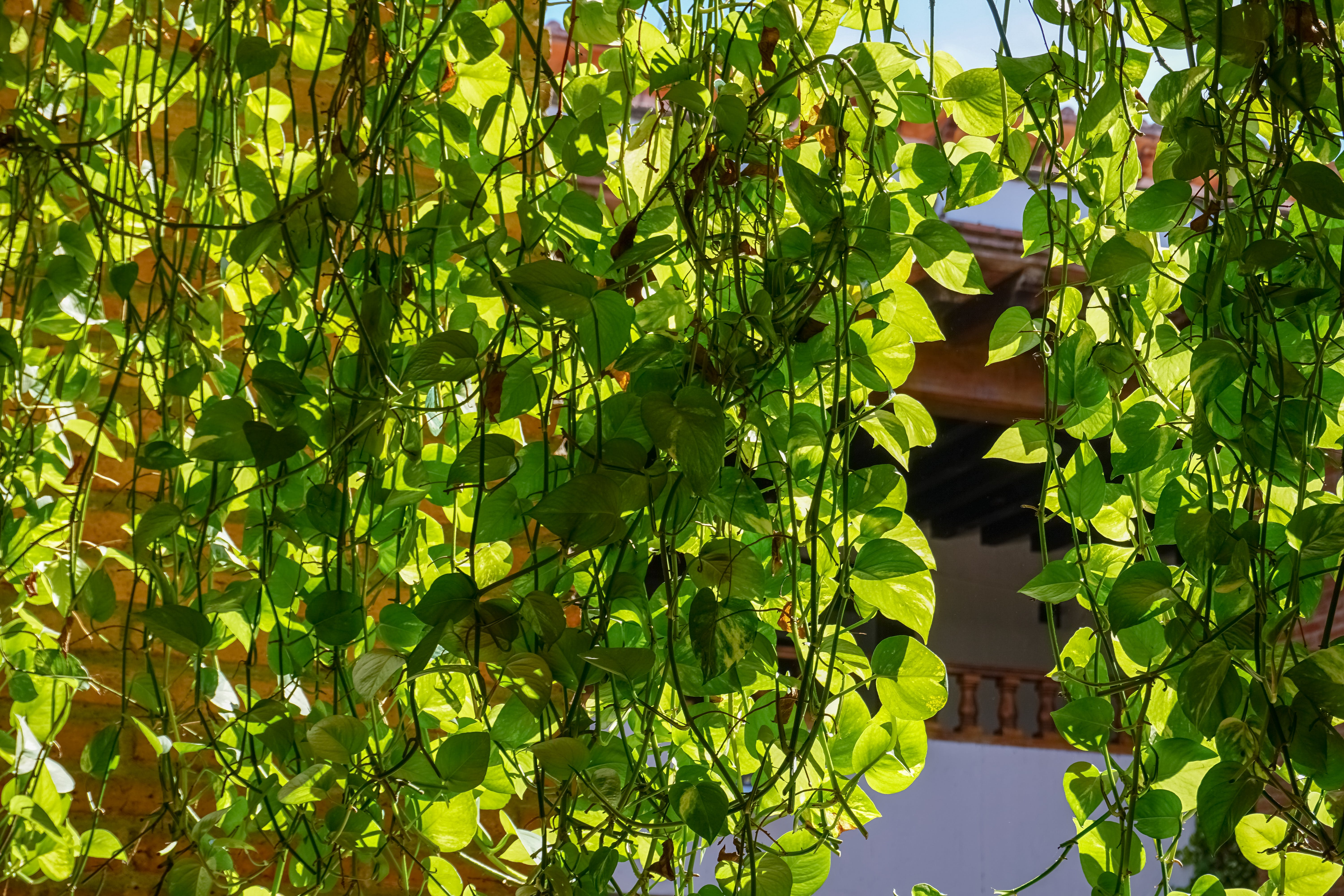 Free stock photo of city, daylight, green, leaves