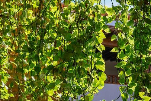 asmalar, gün ışığı, Kent, yeşil içeren Ücretsiz stok fotoğraf