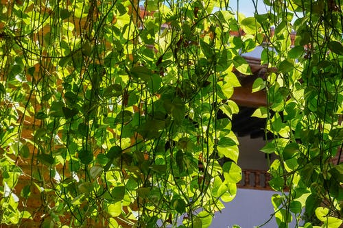 Free stock photo of city, daylight, green, vines