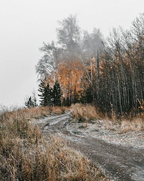 Imagine de stoc gratuită din arbore, cădere, ceață
