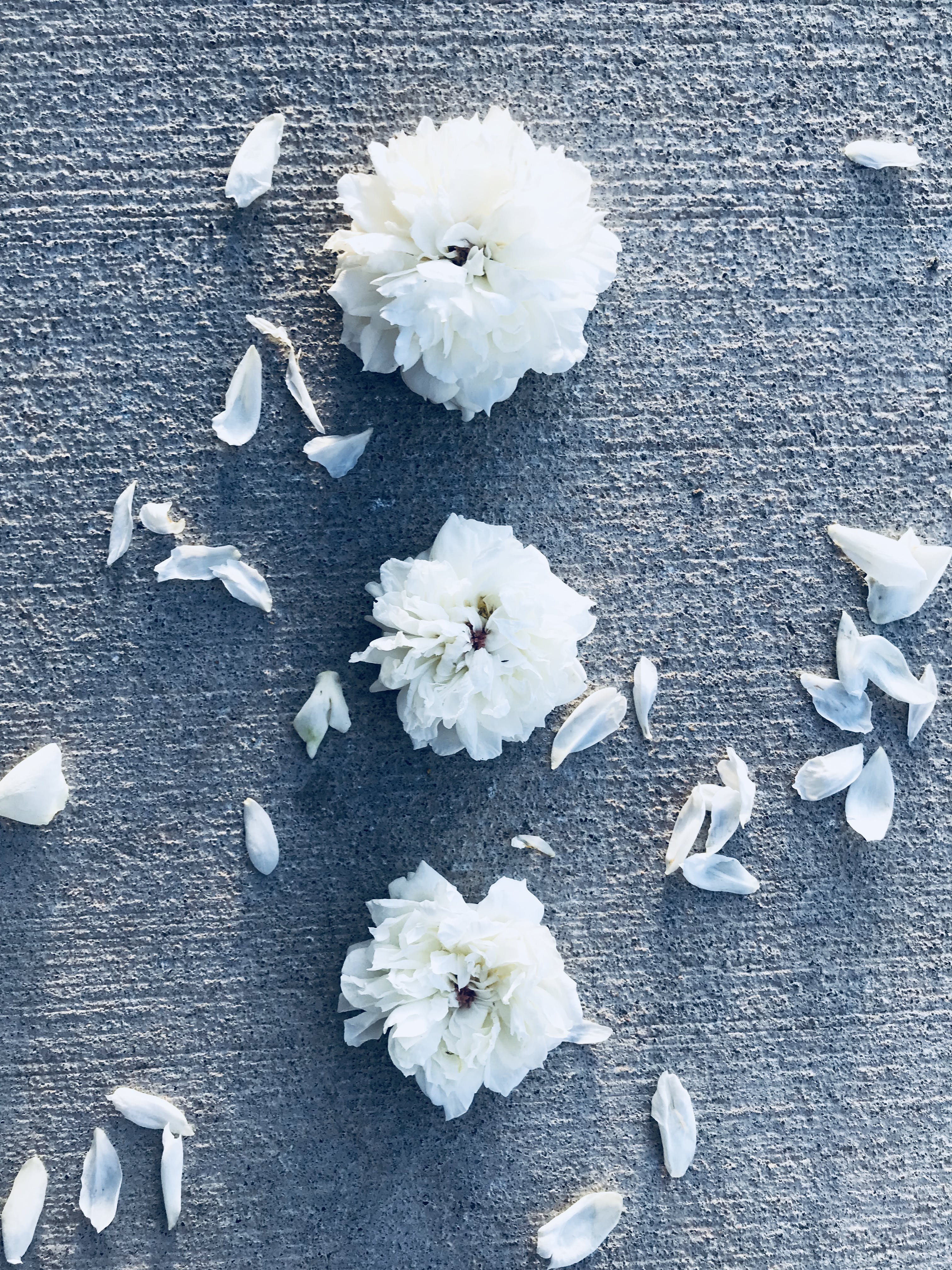 Three White Flowers With Petals