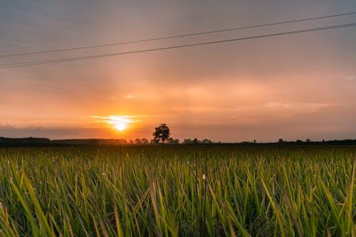 Gratis lagerfoto af @outdoor, afgrøde, baggrund