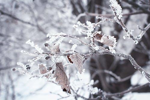 Imagine de stoc gratuită din arbore, brumă, codru