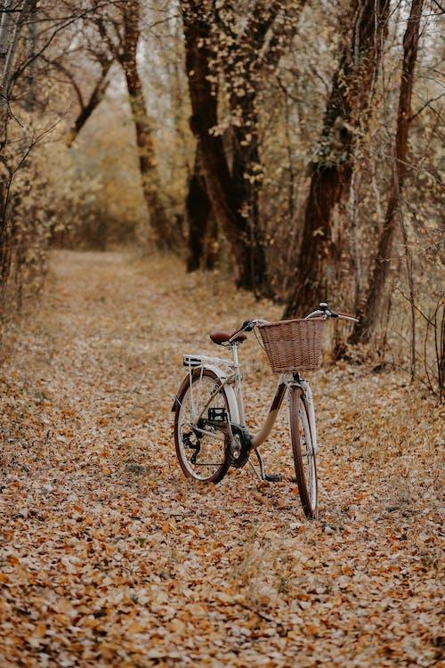 Foto d'estoc gratuïta de a l'aire lliure, arbre, bici