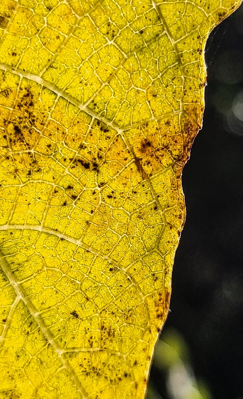 Free stock photo of autumn, autumn leaves, dry leaves