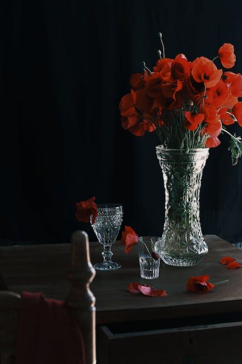 工作室拍攝, 廠, 植物 的 免費圖庫相片
