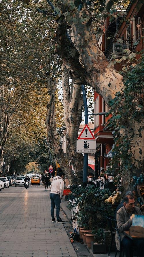 People Walking on Sidewalk Near Trees and Cars