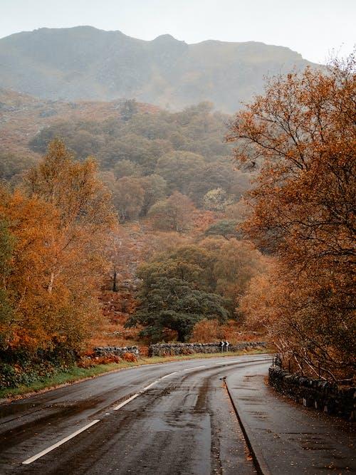 Immagine gratuita di autunno, cadere, strada