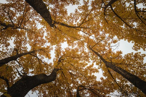 Gratis arkivbilde med årstid, bagasjerom, blad