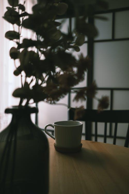 Gratis lagerfoto af blomst, bord, hvid