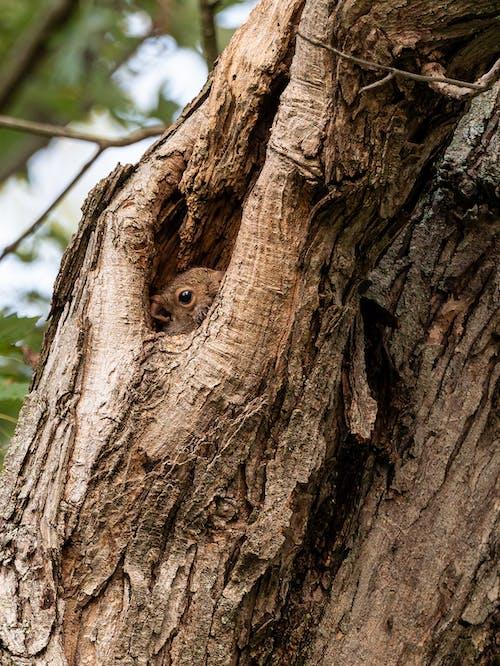 Immagine gratuita di abbaiare, albero, ambiente