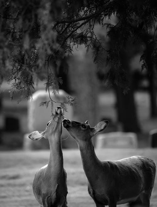 Immagine gratuita di albero, animale, animali allo stato selvatico