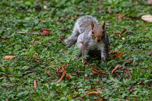 Imagine de stoc gratuită din adorabil, animal, arbore
