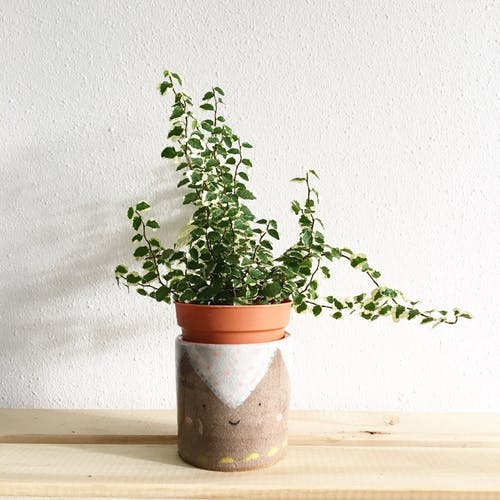 Green Leafy Plant Potted on Clay Pot