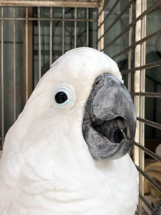 bílý pták, papoušek, zvíře